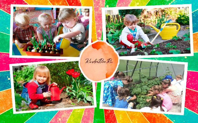 9 растений, которые могут выращивать дети